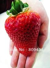 Free-Shipping-100pcs-big-giant-font-b-red-b-font-font-b-fruit-b-font-font.jpg_220x220